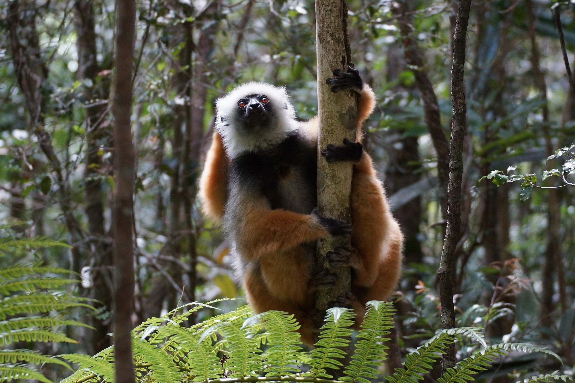 Madagaskar Opener 003 2000px
