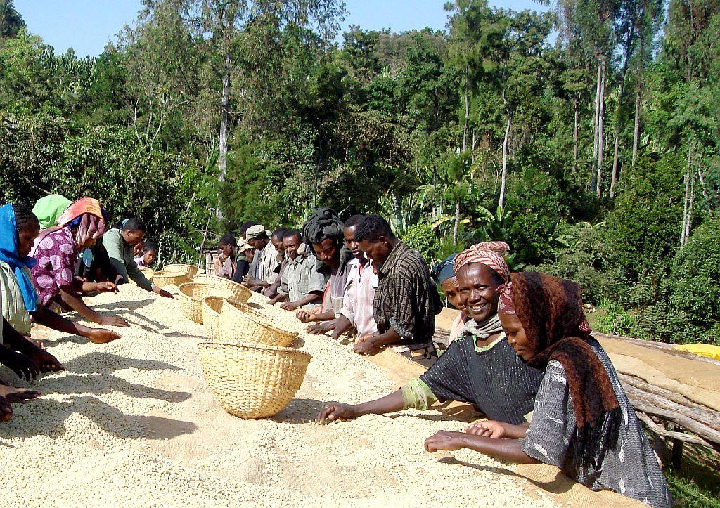 Äthiopien Kaffee 02