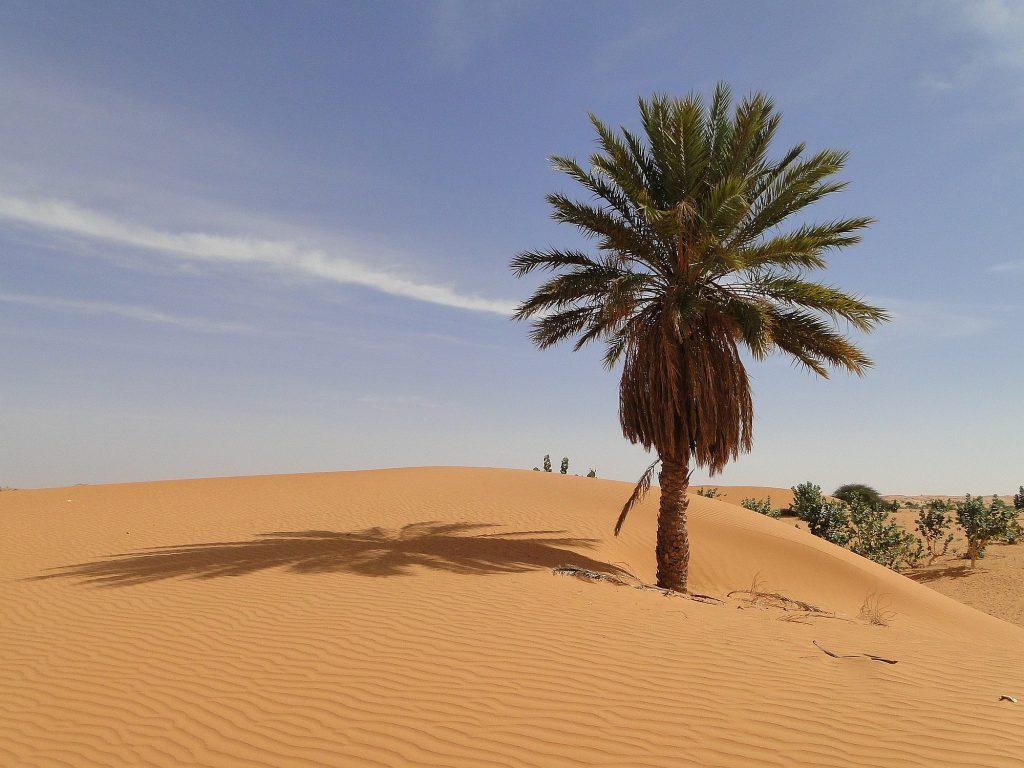 Mauretanien Opener 001 2000px