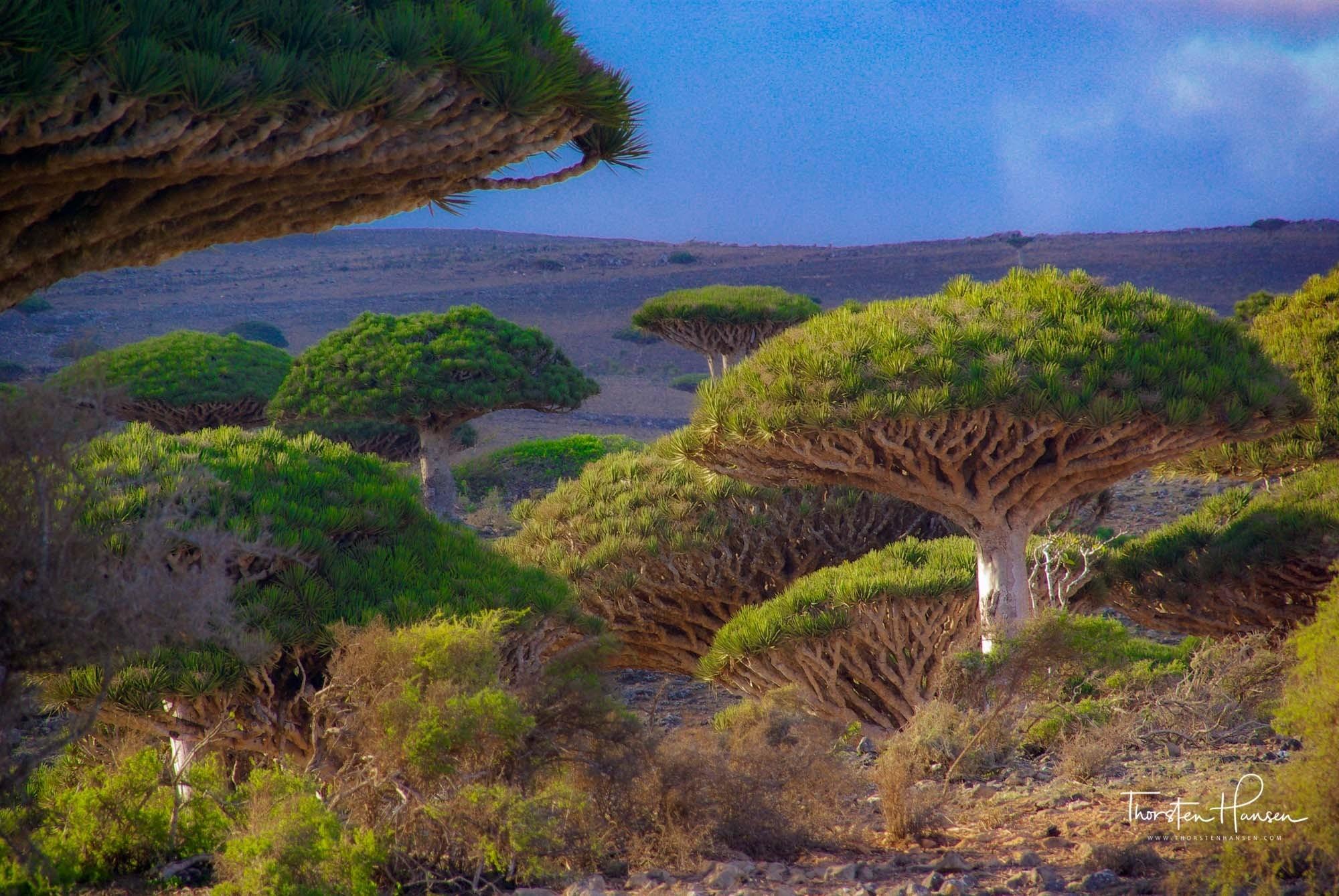 Sokotra 03 2000px