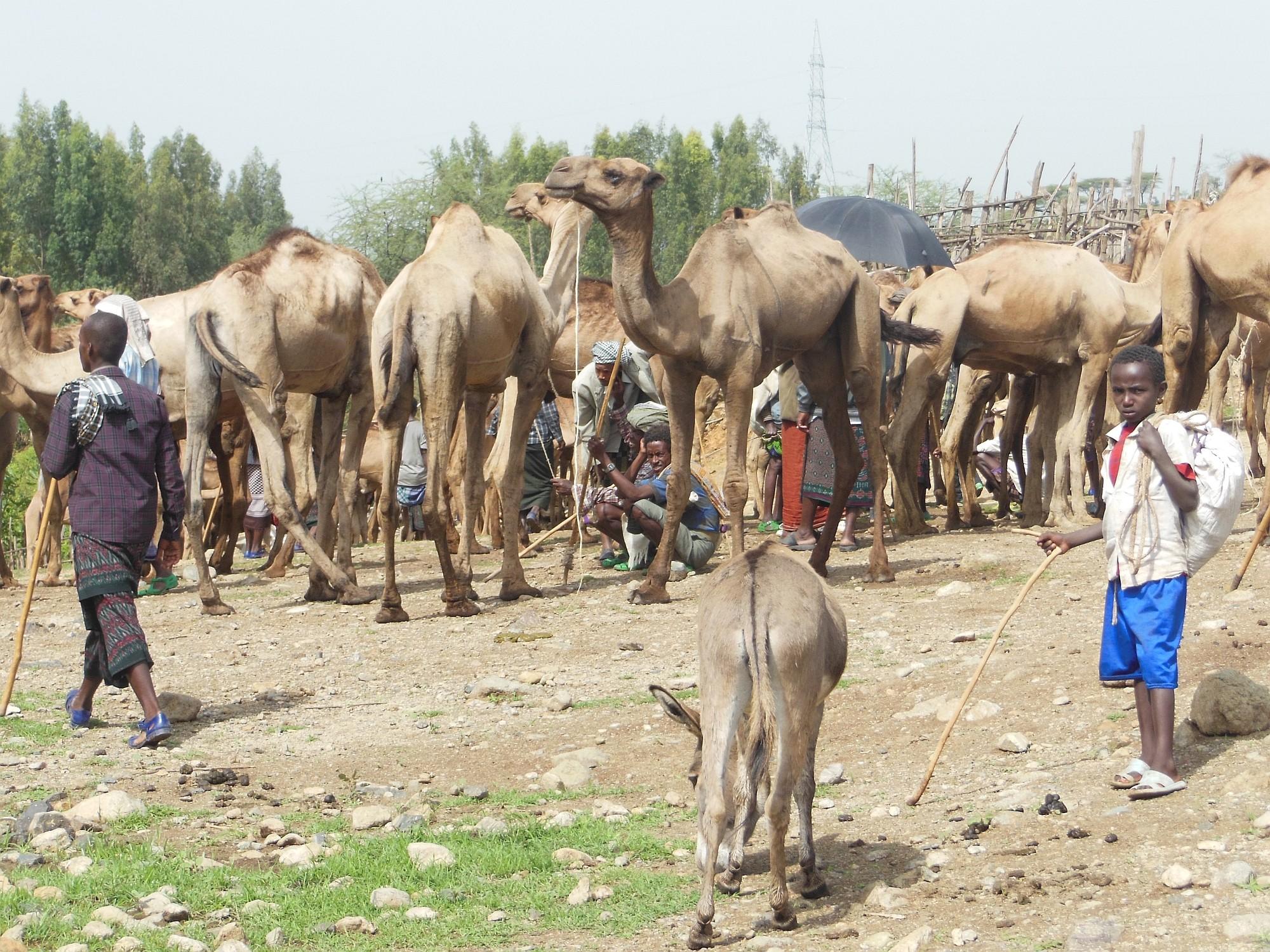 Äthiopien_new_2000px_07