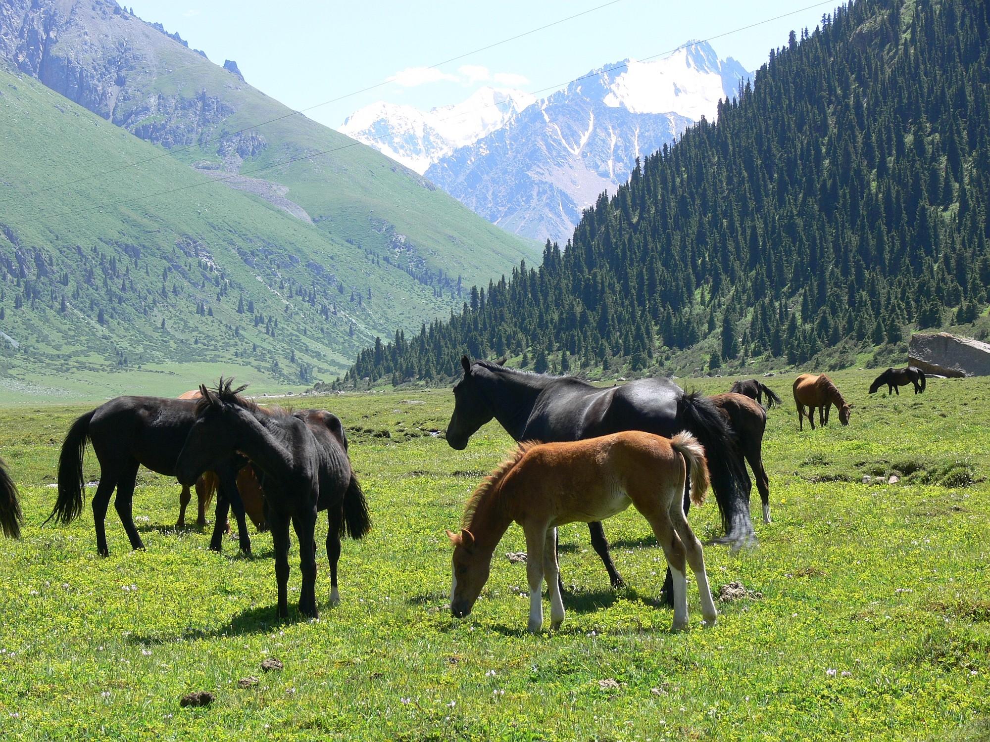 Kirgistan 010 2000px