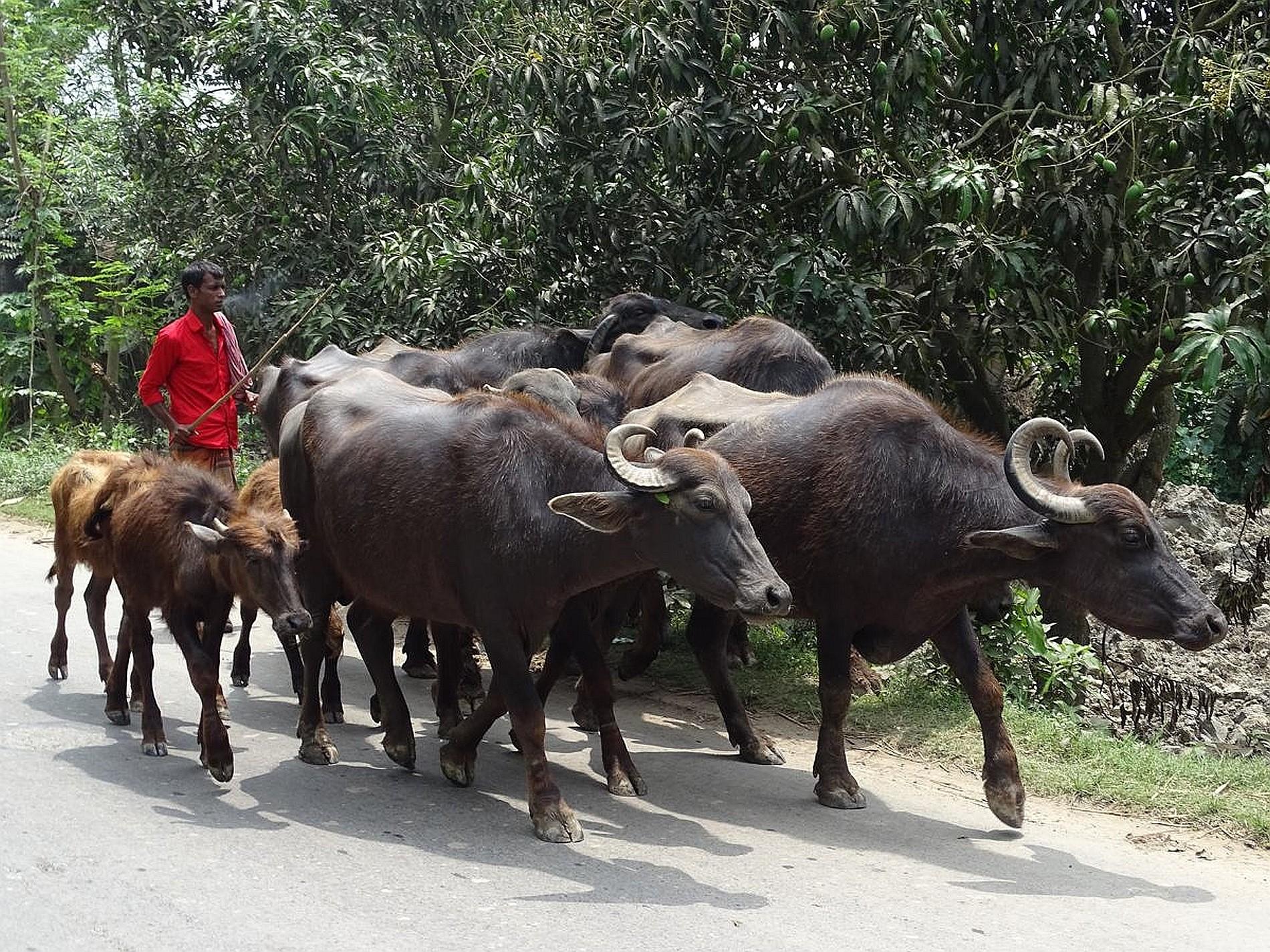 Bangladesch Slider 021 2000px