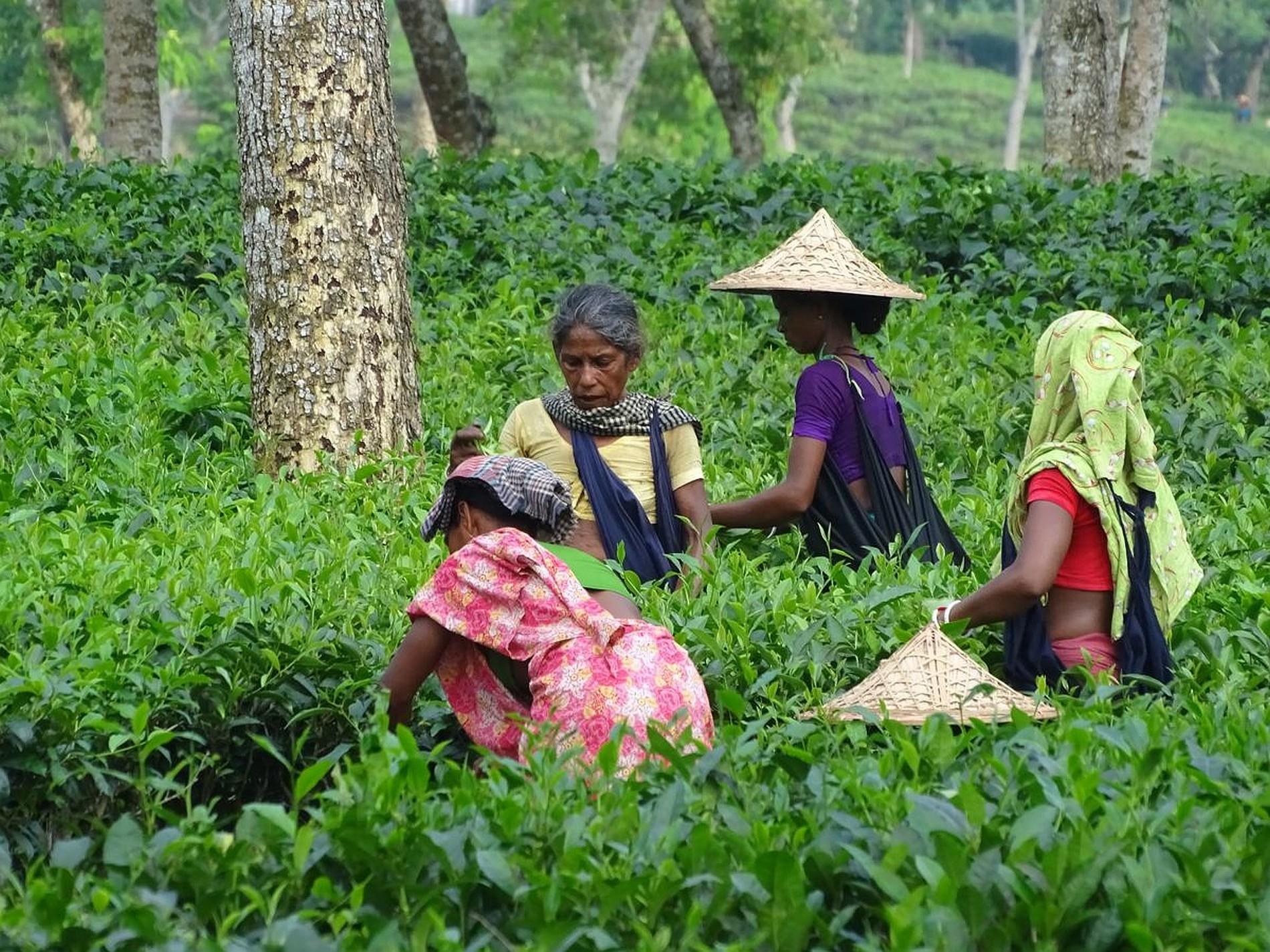 Bangladesch Slider 027 2000px